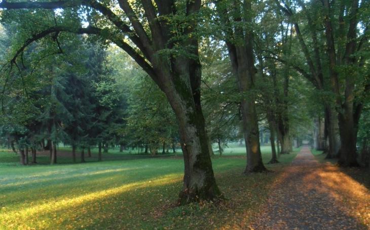 Stromy miluji. Pomáhají mi uzemnit se a být v klidu... Branecká alej je v soutěži Alej roku třetí