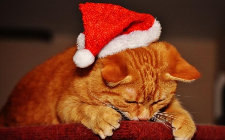 Vánoce, Vánoce přicházejí... Šťastné a veselé vám všem