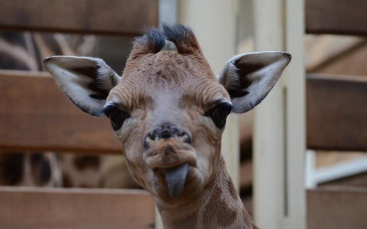Silvestrovský rámus je noční můra a hrozný stres pro zvířata: 31. 12. bez petard a rachejtlí,  vyzývá Zoo