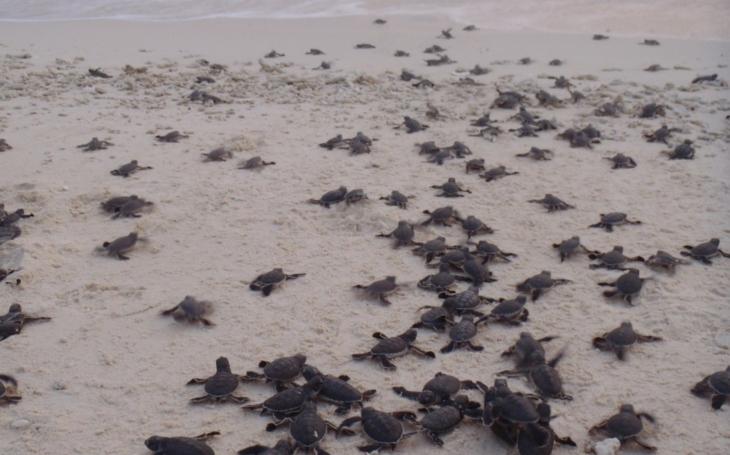 Osud mořských želv není lhostejný liberecké Zoo. Do Čech i do Indonésie dodala omalovánky nejen pro děti