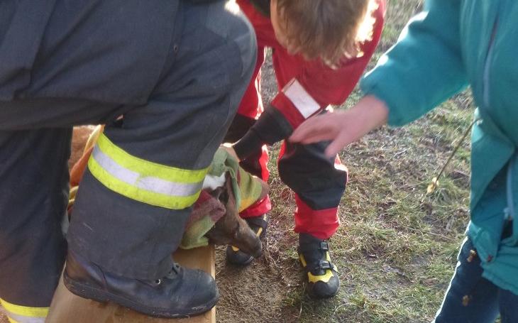 20 minut v ledové vodě. Hasiči nasadili masáž srdce psíkovi, který se propadl dírou v ledu, a...