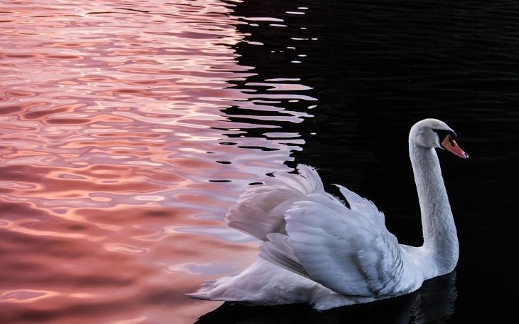 Obrazy unikátní přírody a zvířat... Dechberoucí fotky Czech Nature Photo, podívejte se na finálové snímky