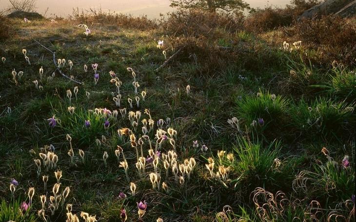 V Národním parku Podyjí vyrostly vzácné poklady, které jinde na světě nenajdete. Podívejte se