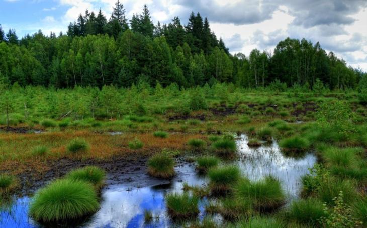 Šumavské lesy si svůj status chráněné krajiny doslova užívají. Neohrozila je vichřice ani kůrovec