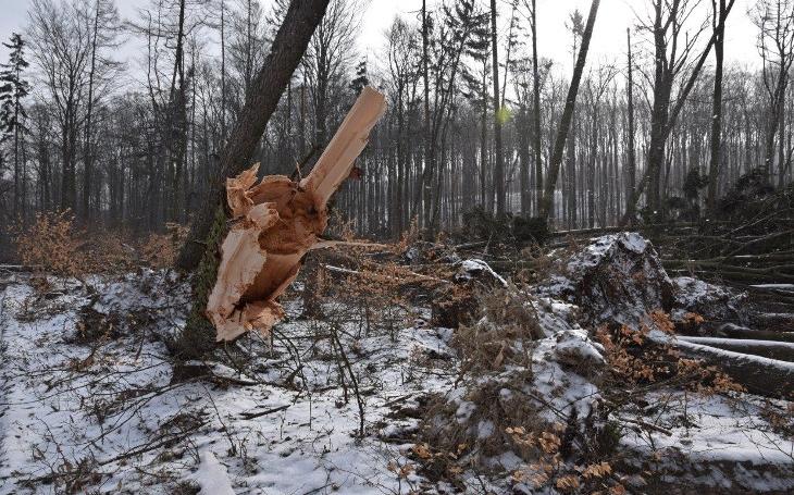 A těžaři mají útrum. Odteď mohou likvidovat jen kalamitní dřevo. Po vichřici padly další zákazy vstupu do lesů