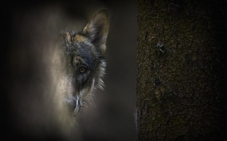 Pojďme vystřílet všechny vlky. Anebo broumovské farmáře. Komentář Štěpána Chába