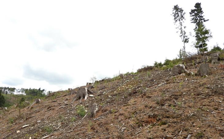 Jen holiny a moře pařezů... Masivní vymírání lesů je vidět hlavně v Jeseníkách. Nejvyšší čas začít něco dělat