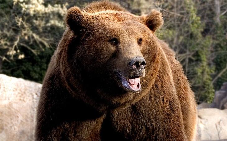 Do Beskyd se vrátila vlčí smečka, žije tam desítka rysů a pozor... I jeden medvěd. Jak na chlupáče?