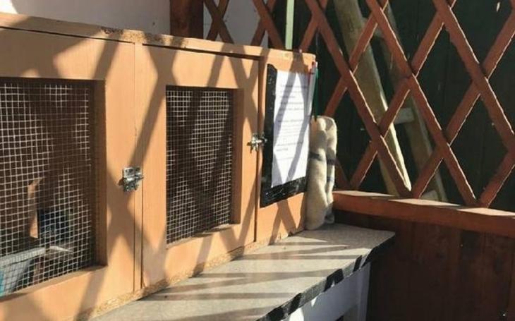 Topení koťat v rybníku? Fuj. V Česku existuje první kočkobox. A kočičí máma má spoustu historek…