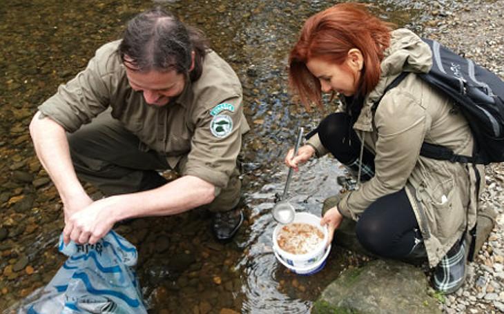 60 tisíc malých lososů zaplavilo říčku Kamenici. Příští rok se jich vrátí jen pár desítek