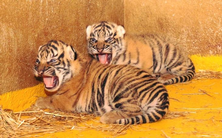 Jihlavská Zoo se s jarem rozrodila. A to jak s chlupatými obyvateli, tak i s akcemi
