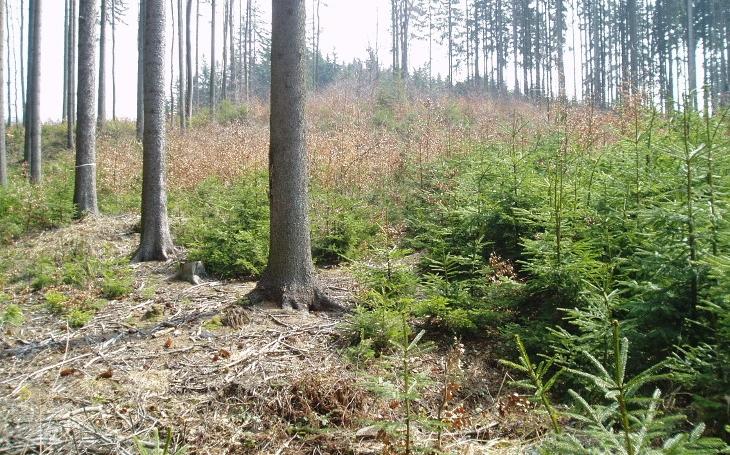 Přednější jsou lesy, nebo prachy? Vypadá to, že budeme žít na poušti. Smrková monokultura suchá období nezvládá