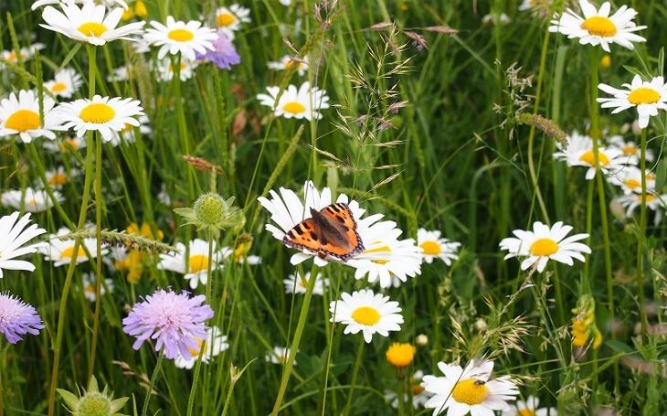 Někteří prostě chtějí návrat přirozeného řádu v přírodě. Proč? Mizí hmyz, mizí voda z krajiny, mizí krása a život