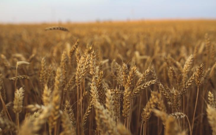 EU zkrátí velkým zemědělcům dotace. Konečně? Komentář Štěpána Chába
