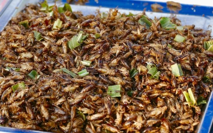 Co takhle hmyzí burger z jemně mletých cvrčků? V ČR je to čerstvě již legální. Ministerstvo zemědělství totiž maká
