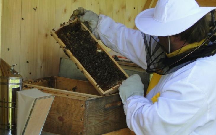 Téměř 20 kilo zlatavého nektaru. Nový Jičín má za sebou první stáčení městského medu