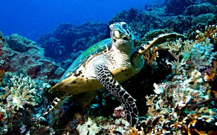 Nový trend : Koruna ze vstupného do brněnské Zoo pomáhá zachraňovat mořské želvy v Indonésii