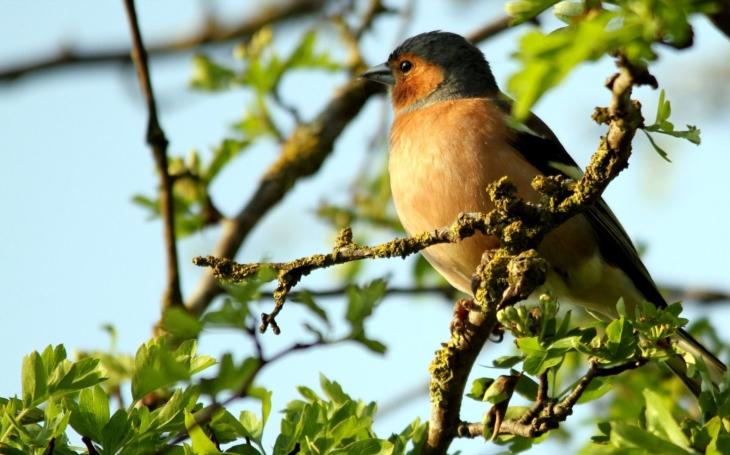 Jde o chráněnou oblast, kde žije přes dvě stovky druhů zpěvných ptáků... Unikátní Slow rádio nabízí jihočeskou přírodu