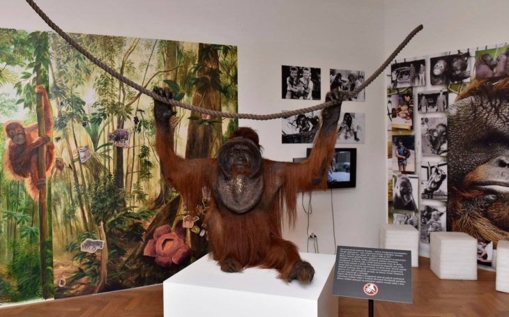 Ňuňák se vrací. Do ústecké Zoo přišel se svou družkou Ňuninkou v roce 1989 jen natáčení filmu Poledňákové, ale…