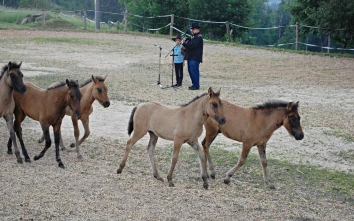 Jilemnice má kmotřence, roztomilého huculského koníka. Jmenuje se Heřmánek a pochází z Janovy hory
