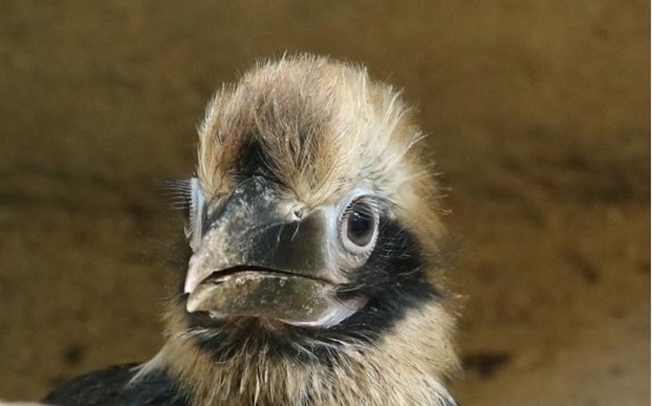V liberecké Zoo to za chvíli bude jako v mateřské školce. Mláďata se jim tam rodí jako na běžícím pásu