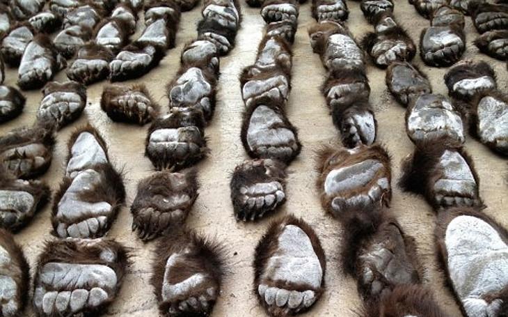 Ostravská Zoo odstartovala unikátní kampaň o ilegálním obchodu se zvířaty. Všichni můžeme měnit svět