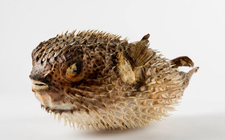 Nahlédněte do fascinujícího světa mořských živočichů: Výstava Pod mořskou hladinou v Hradci Králové
