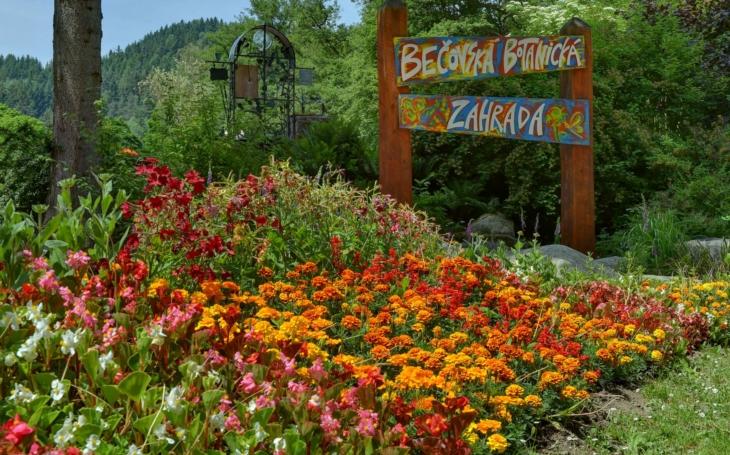 Bečov má další atrakci, unikátní botanickou zahradu, starou sto let. Vznikla díky šťastné náhodě