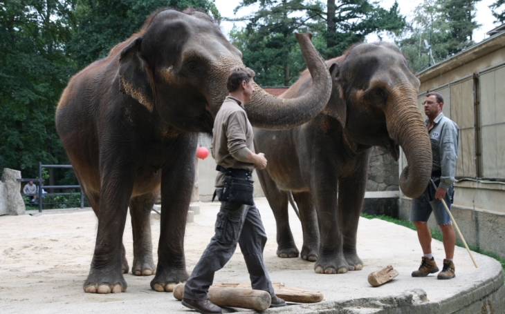Druhá srpnová sobota bude v liberecké Zoo opět patřit slonům