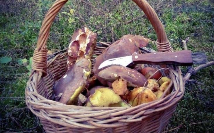 Už rostou! Nejvíce hub je na Vysočině a v jižních a západních Čechách. A 10 rad, jak houbám prodloužit život