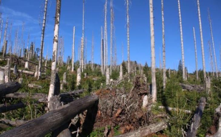 Ekologové mají recht? Příroda si s obnovou lesa umí pomoci sama; ukazují to výsledky rozsáhlého biomonitoringu