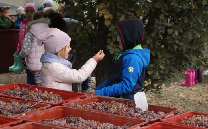 Nádoby s kvevri vínem… Z Moravy se stává vinařská velmoc, mají tu i vychytávky. Vinaři z Lednice je naplnili již potřetí