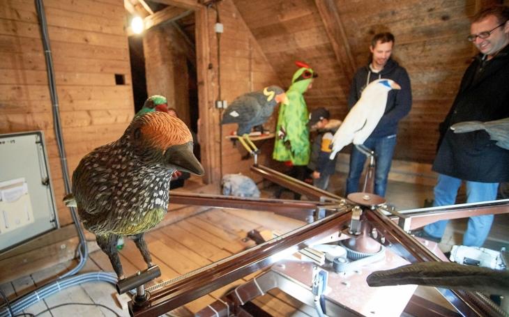 Majna Rothschildova, loskuták velký, bulbul korunkatý… Ptačí orloj v liberecké Zoo upozorňuje na vymírající druhy