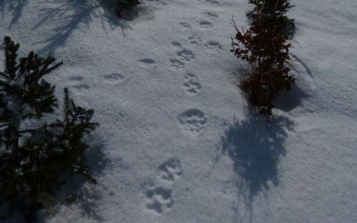 Dobrodružné putování Jeseníky za vlky a rysy... Nové dobrovolníky vyškolil seminář Vlčích a Rysích hlídek