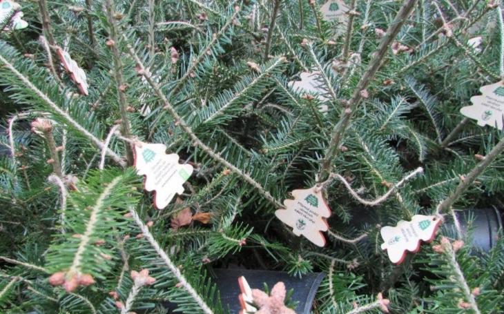 Vánoční stromeček v květináči je prostě trendy. Vánoce, Vánoce přicházejí, šťastné, veselé a… ekologické III