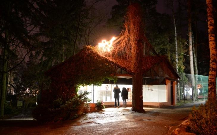 Klid, pohoda, teplý punč, noční zvířata, prostě úplně jiná zahrada. Zoo Olomouc zve na večerní vánoční prohlídky