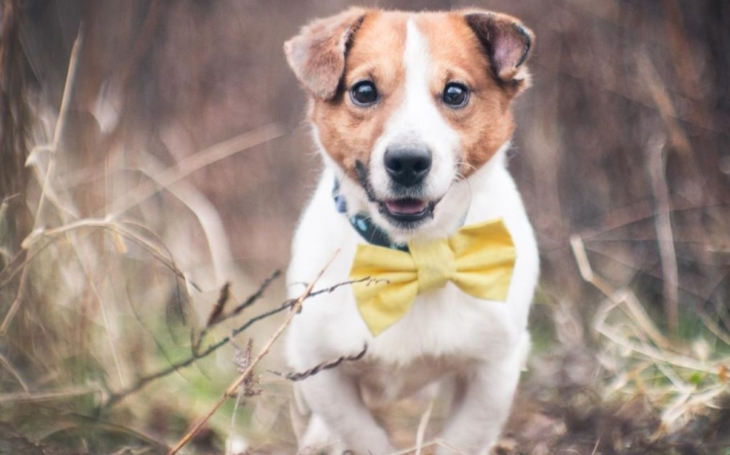 Zanedbaný a týraný ´raslík´ Tony čeká v táborském útulku na hezčí život. Nehledáte věrného psího kamaráda?