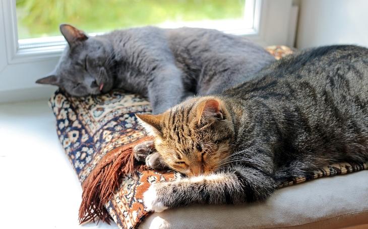 6 důvodů, proč mít doma kočku