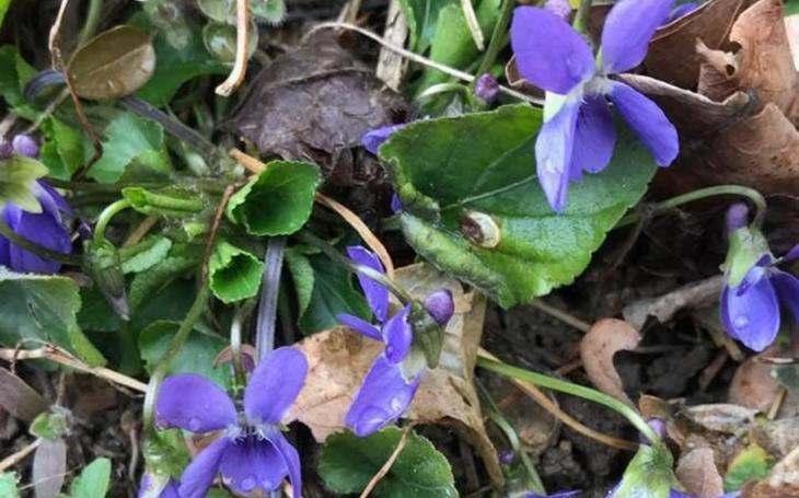 Víte, že už kvetou první kytky? Už je co natrhat. Komentář Štěpána Chába