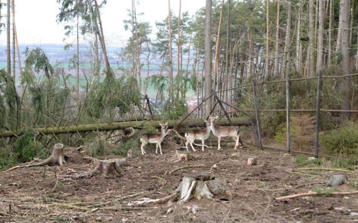 Jeleni a daňci jsou zpět, zmizeli ale tři kozorožci. Orkán Eberhard řádil po celé ČR, v Olomouci zavřeli Zoo. A blíží se Franz