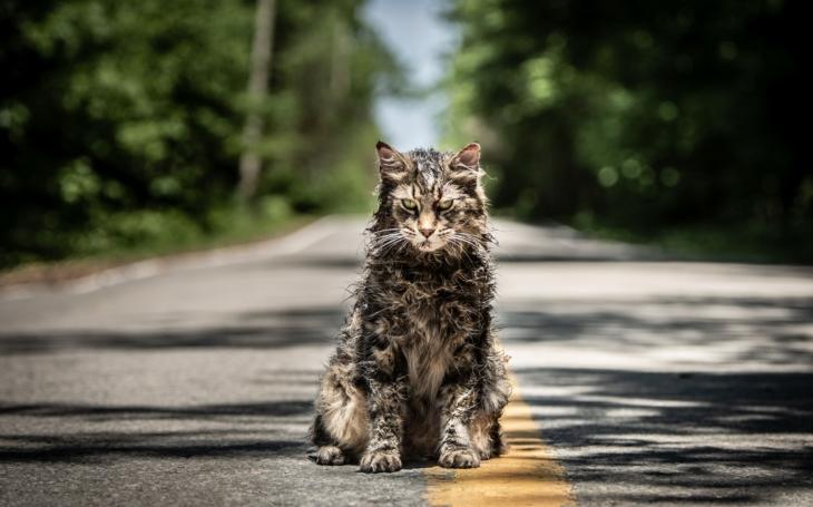 Máte rádi kočky? Po shlédnutí hororu Řbitov zvířátek se jich začnete bát. Premiéry Pavla Přeučila
