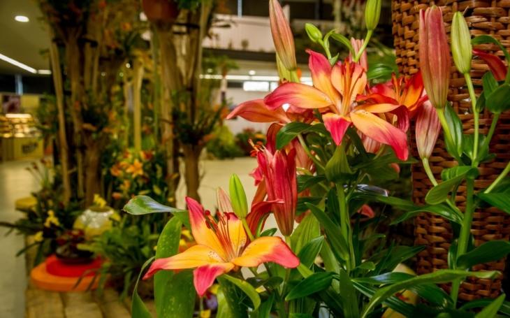 Město v záplavě jarních květin, ale i bonsají a suiseki i křehké krásy skla. Začíná jarní Flora Olomouc