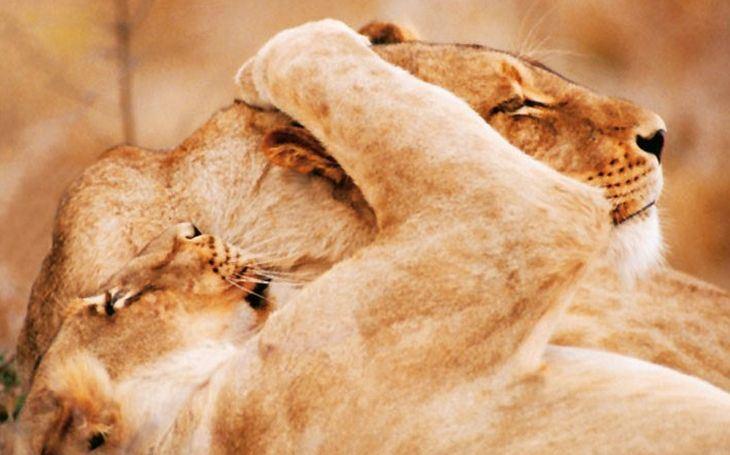 Vydejte se na safari. Jak žijí ve volné přírodě ti, které znáte ze zoologických zahrad?