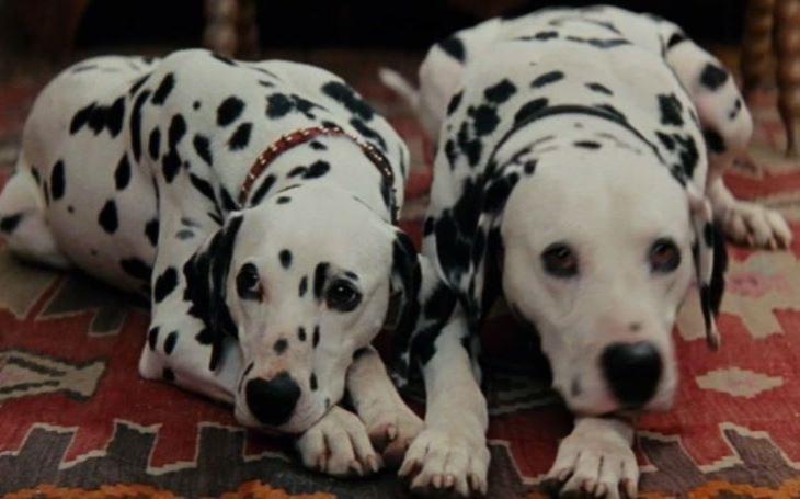 Příběhy o psí lásce, přátelství a odvaze nikdy neomrzí. Tenhle navíc znáte z filmového plátna