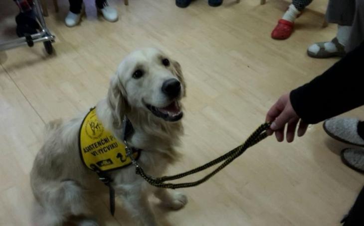 Terapie psí láskou skutečně funguje. Co vše ´umí´ canisterapie v sociálních službách, vysvětluje radní Lachnit