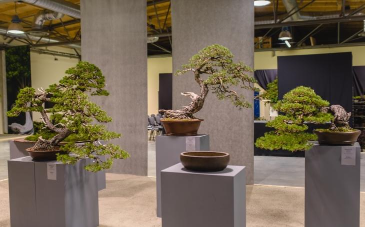 Miska, strom, voda, kámen, plynoucí čas… Vzácné bonsaje i sbírku kamenů suiseki vystavuje  Kroměříž