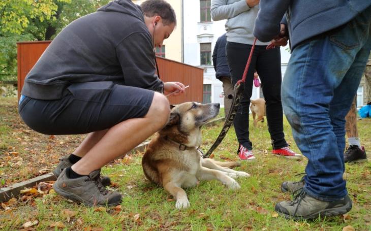 Očkování zvířat lidí bez domova vKomunitním centru Prádelna proběhlo úspěšně