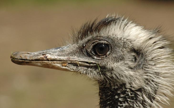 Neschopný pták, který jde s každou... Olomoucká Zoo není největší, nejmodernější, ani nejstarší, zato je hrozně vtipná