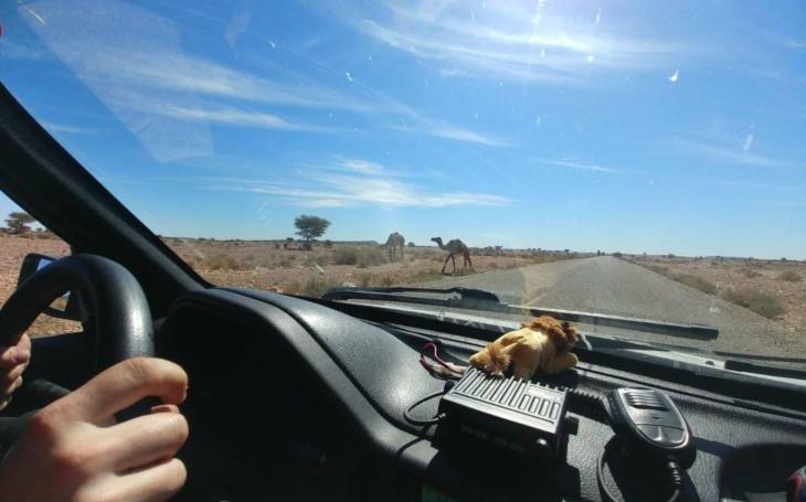 Velblůd, kam sa podíváš. Valaši jedou Afrikou vytuněným Peugeotem 106, co žere naftu a trávu kolem cesty