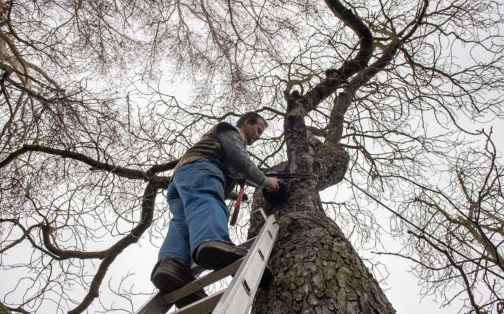 Dobrá zpráva pro všechny ´emo´ a ´gotiky´: Plzeň oživuje centrum města poněkud netradičně, netopýry